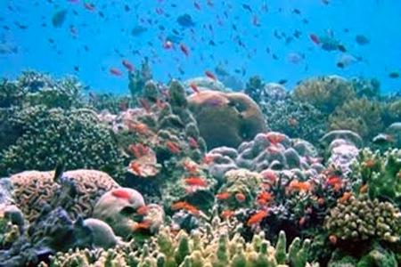 nuevas-especies-marinas-en-canarias1