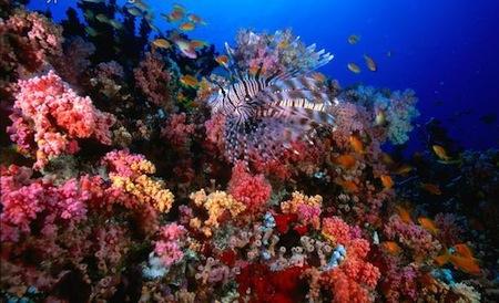 arrecife-hp-en-las-islas-maldivas