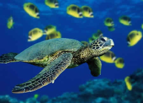 ¿Que pasaria si el agua del mar se volviera dulce?