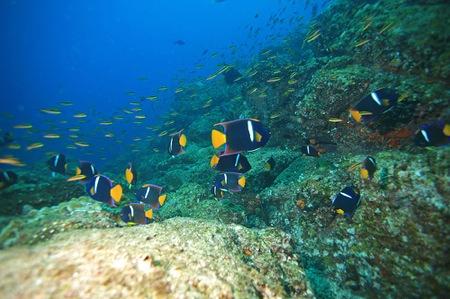 2canon-isla-sicilia