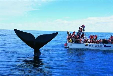 ballenas-en-chubut