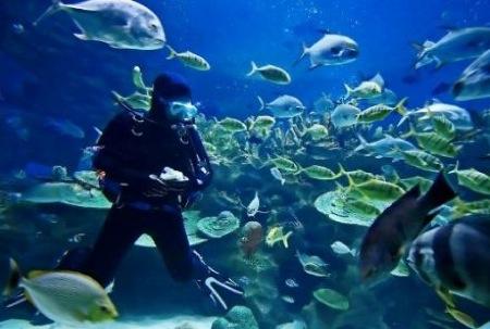 buceo-islas-caiman1