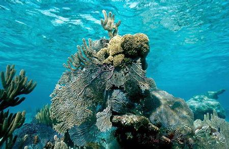 coral-ret