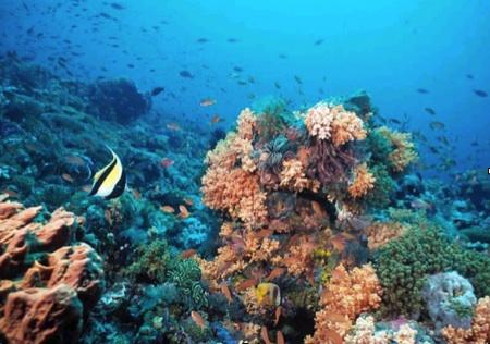 La gran barrera de coral. Grupo Navega.