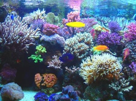 corales221