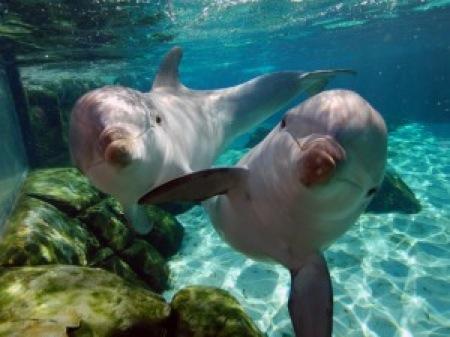 delfines-1-300x225