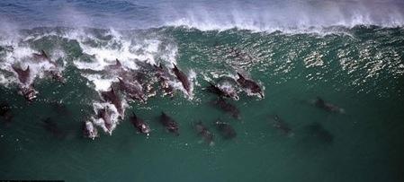 delfines-costa-sudafrica1