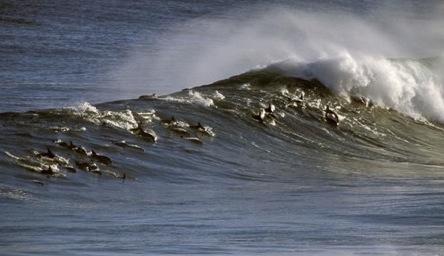 delfines-costa-sudafrica41