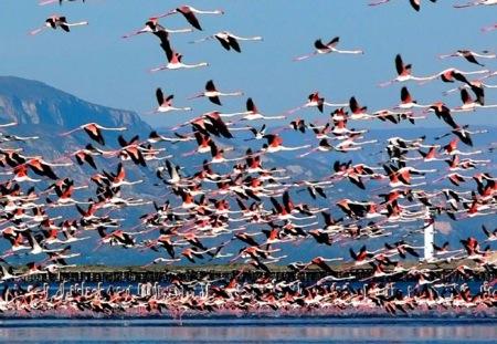 Aves migratorias en el delta del Ebro. Incentivo nautico de empresa