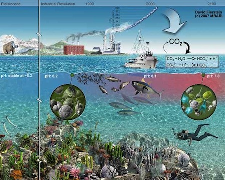 disminucion-ph-oceano