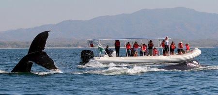 grupo-navega-1