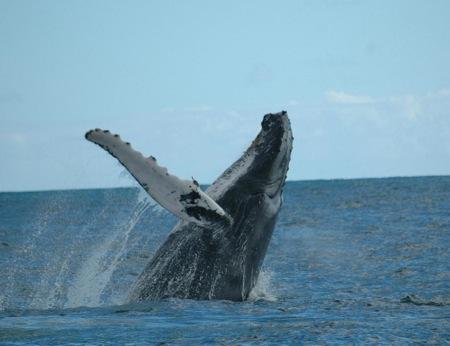 Grupo Navega apoya las iniciativas de conservación de las ballenas en cualquier océano del mundo