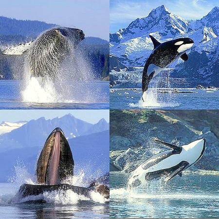 mamiferos-marinos