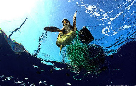 mar-mediterraneo-una-tortuga