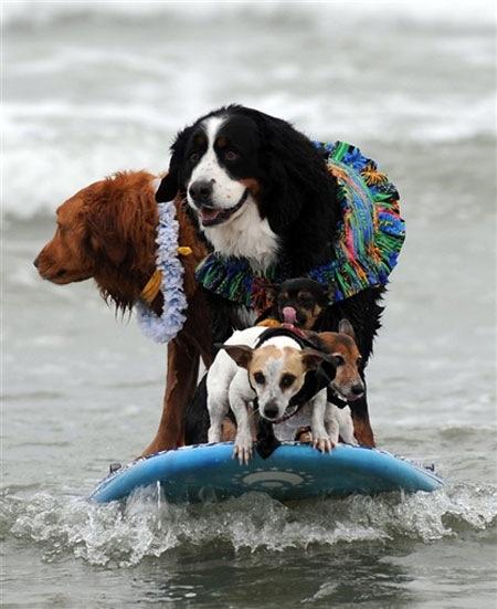 perros_surf_2