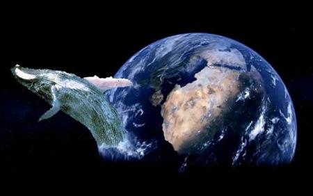 santuario-global-ballenas