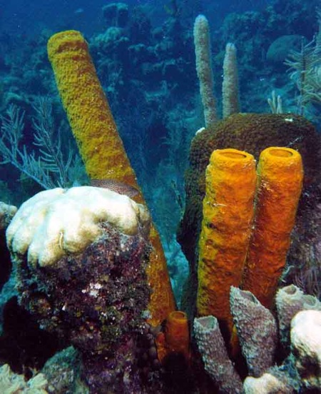 spongegardenandfish