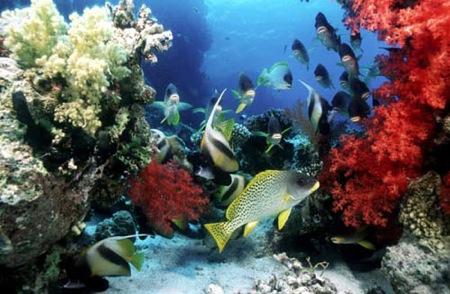 submarinismo-peces