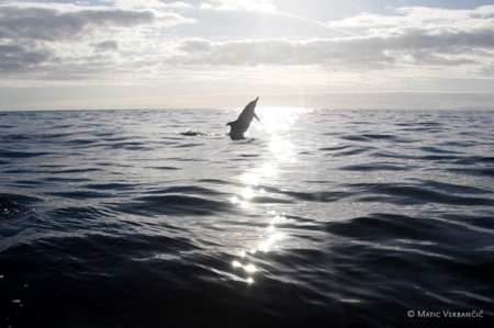 whale-watching-0130